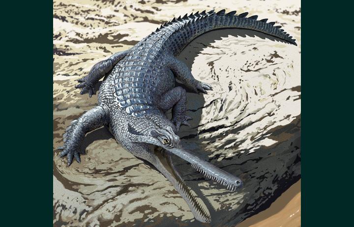 Champsosaurus laramiensis