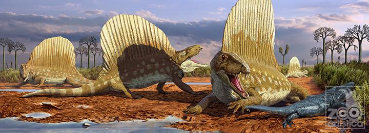Dimetrodon borealis