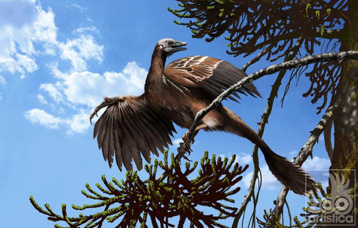 Archeopteryx siemensii
