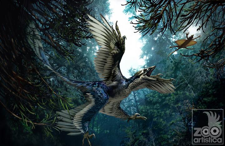 Microraptor zhaoianus